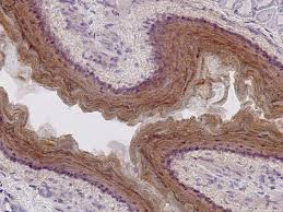 Immunohistochemistry Services in Lahore
